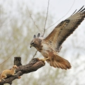 Encounter ( Bussard-Wiesel)